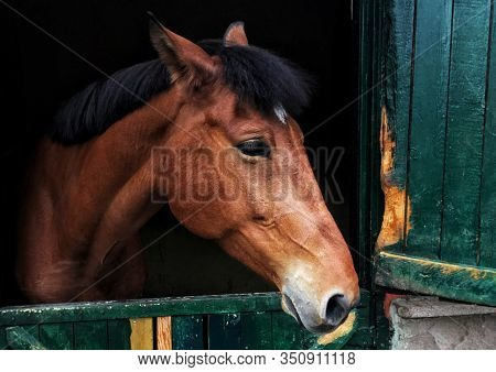Portrait Of Horse In Stable Seen Through Window