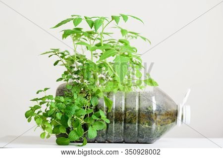 Plasstic Bottles Water Diy For Planting Vegetables Plant And Decoration In Garden, Reuse And Recycle