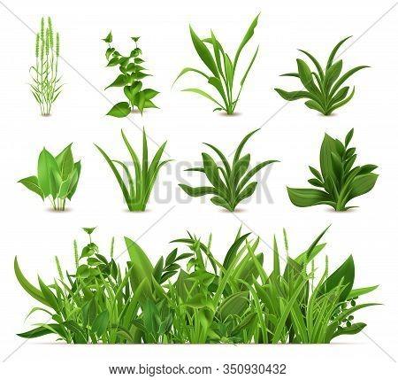 Green Realistic Spring Grass. Fresh Plants, Garden Seasonal Growth Grass, Botanical Greens, Herbs An