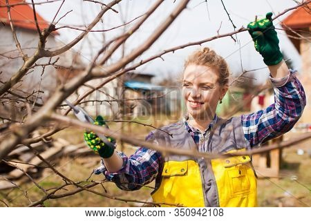 Woman Gardener Pruning Fruit Trees With Pruning Shears.