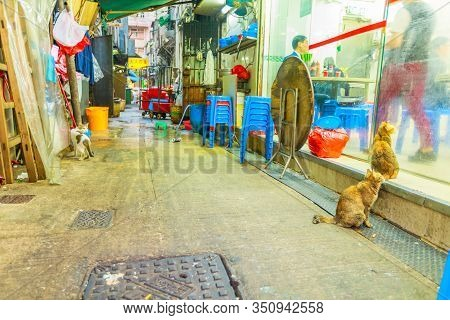 Hong Kong, China - December 5, 2016: Stray Cats Begging For Food In Front Of A Chinese Restaurant Wi