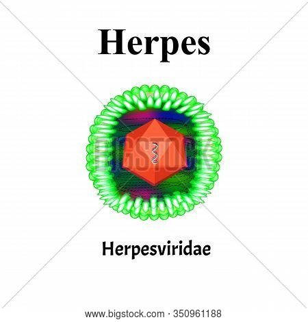 Herpes Structure. Herpes Virus Infection. Sexually Transmitted Diseases. Infographics. Vector Illust