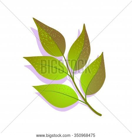 Green Branch Ash Fraxinus Leaf Textured With Shadow, Isolated On White Background. Realistic Single