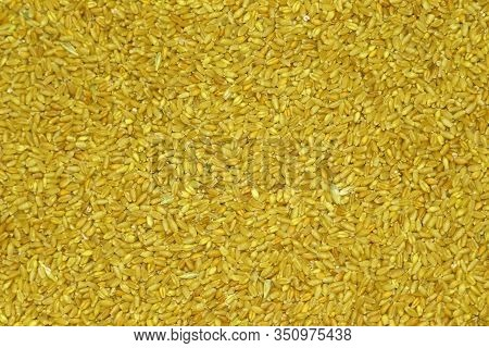 Close Up Of Grains Of Yellow Wheat Background And Texture, Barley Background And Textured, Wheat Abs