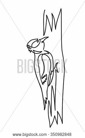 Woodpecker On A Tree Vector Illustration On A White Background