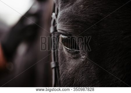 Black Horse, Eyes Horse Close Up, Black Wild Horse In Natural Background, Portrait Of Horse, Macro S