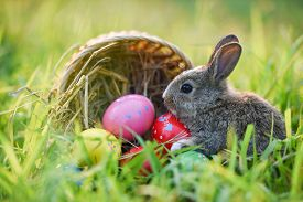 Easter Bunny Basket With Brown Rabbit And Easter Eggs Colorful On Meadow On Spring Green Grass Backg