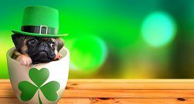 Cute Pug Puppy Inside A Mug Wearing A Leprechaun Hat