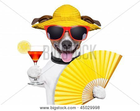 summer cocktail dog cooling of with hand fan poster