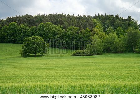 Summer Landscape Of Grass And Trees