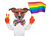 gay pride dog waving a rainbow flag poster