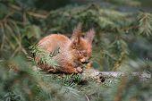 sleeping little squirrel poster