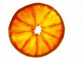 semitransparent orange slice. poster