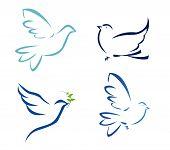 Vector illustration of flying dove on white background poster