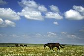 horses on the meadow / landscape / summer / nature background poster