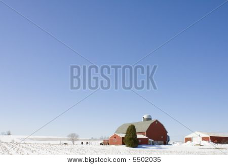 Dairy Farm In The Winter