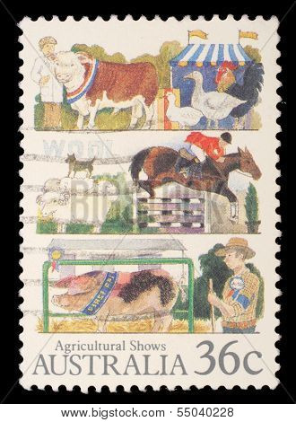AUSTRALIA - CIRCA 1987: A stamp printed in Australia shows the Livestock, Agricultural Shows series, circa 1987
