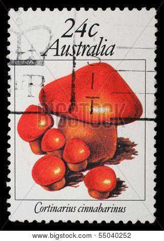 AUSTRALIA - CIRCA 1963: A stamp from Australia shows image of a cinnamon webcap (Cortinarius cinnamomeus), circa 1963