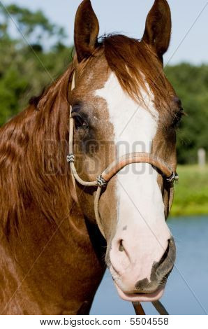 Headshot Of A Horse