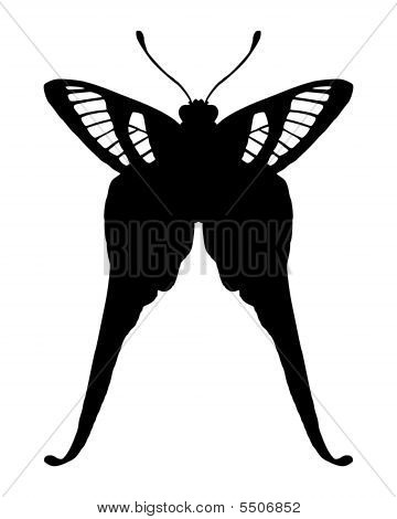 Black and white illustration of tropical butterfly poster