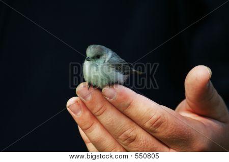 A Bird On The Hand