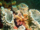 Underwater inhabitants of sea depths of strait Cebu, island Maktan, Philippine, sponge poster