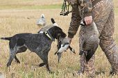 A hunter and his dog out goose hunting poster
