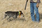 A hunter with his gun dog and a grouse poster