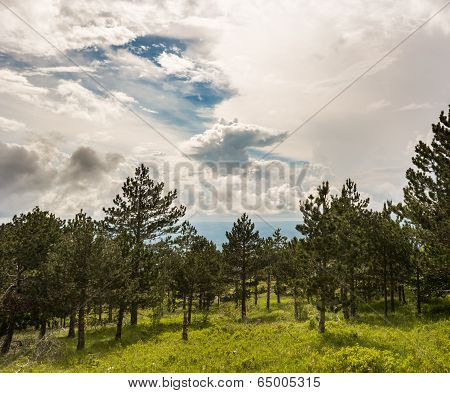 Landscape Of A Mountain Forest