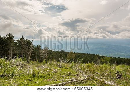 Landscape Of A Mountain Forest With Trees Broken By Wind In Front