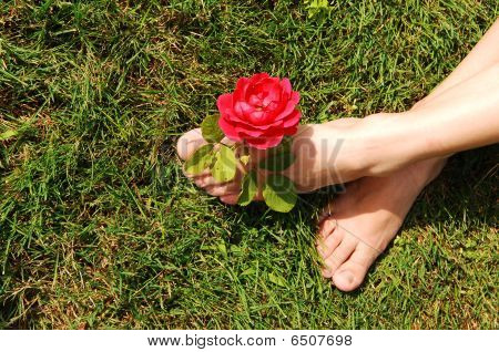 Woman Feet With Rose.