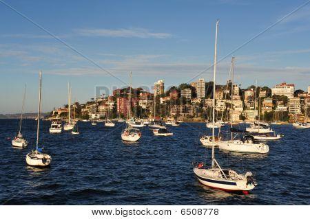 Sydney Harbor Sailboats
