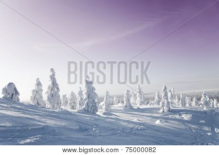 Cold winter with lot of snow and blue sky