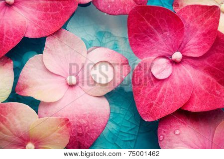 Bowl of water with pink hortensia petals