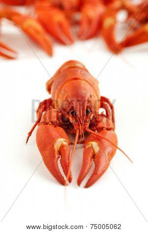 Fresh boiled crawfish on white isolated background poster