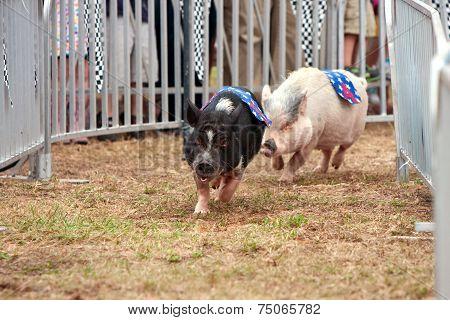 Pigs Race At Georgia State Fair