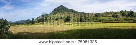 Panorama Of Rice Paddies