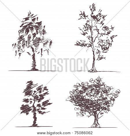 Set of four sketches trees