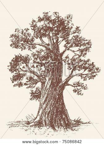 Broad-leaved tree