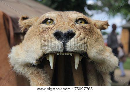 Aquilifer's lion-skin headdress
