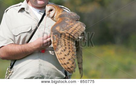 barn owl in raptor show