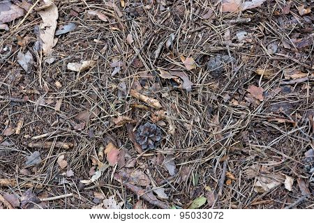 The Fallen Pine Needles.