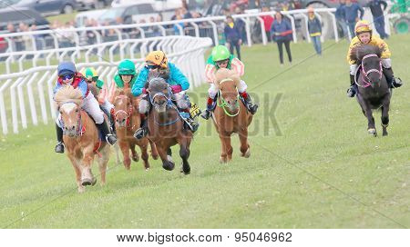 Tough Race Between The Pony Race Horses