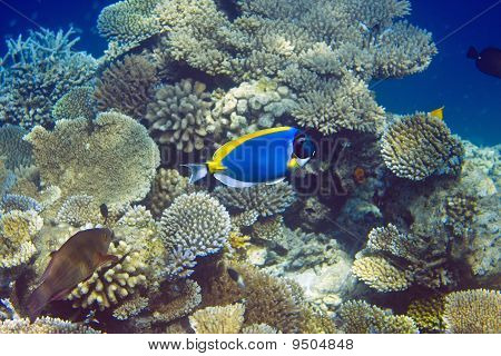 Indian ocean . Fishes in corals . Maldives