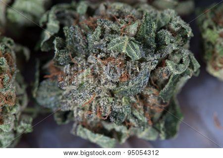 Close up of Master Kush Medicinal Medical Marijuana poster