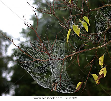 spiders web doing a wonderful job of cathing flies and leaves poster