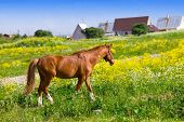 Bay horse on a meadow in a bright sunny day poster
