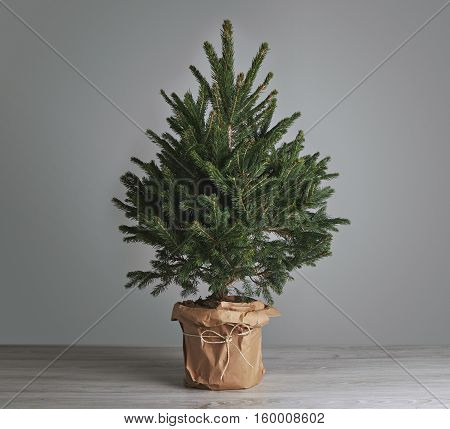 Small Christmas tree in a pot wrapped in paper, undecorated, on plain light gray background Merchandise mockup