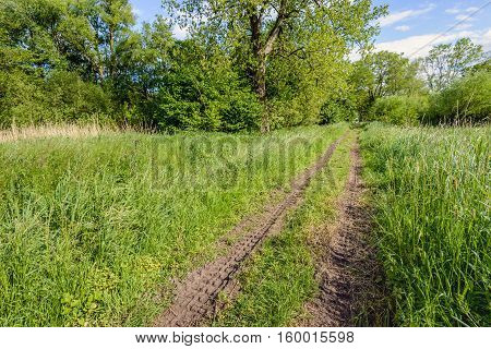 Two wheel tracks in the grass in a rural area with flowering grasses and wild plants. It is spingtime now.