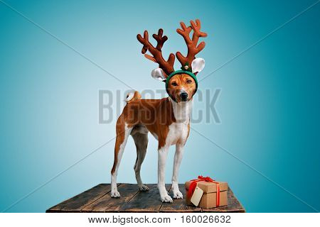 Pretty brown and white puppy dressed up as a reindeer stays next to a present in a box with red bow and tag on cold blue background, looking on camera